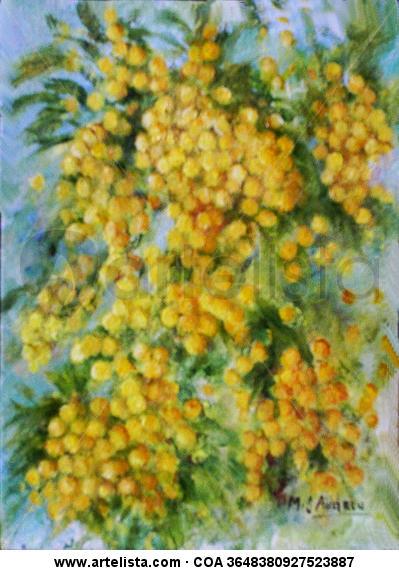 mimosa ii