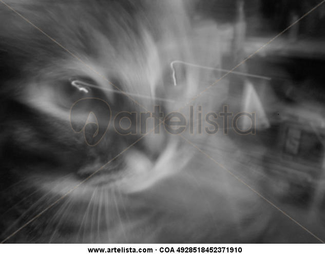 Mancha tras el cristal Nature Black and White (Digital)