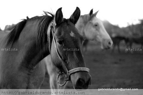 Caballos Blanco y Negro (Digital) Fotoperiodismo y documental