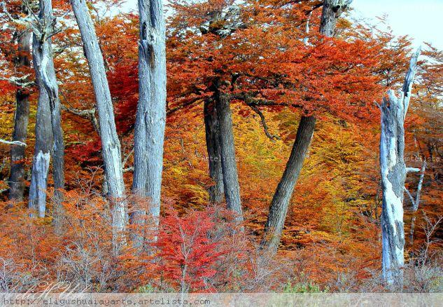 Otoño Mágico Naturaleza Color (Digital)