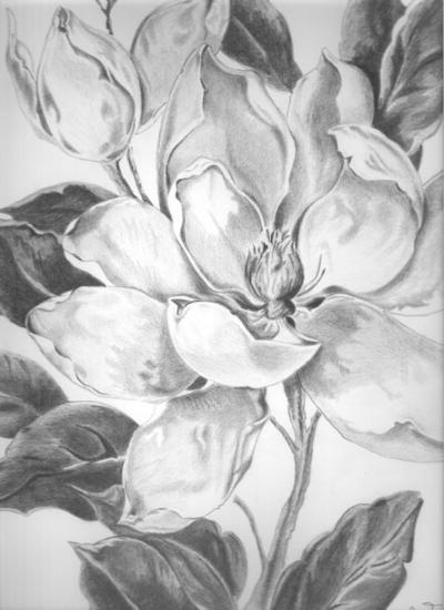 Magnolia Lápiz