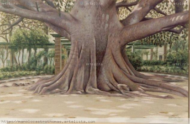Ficus alameda