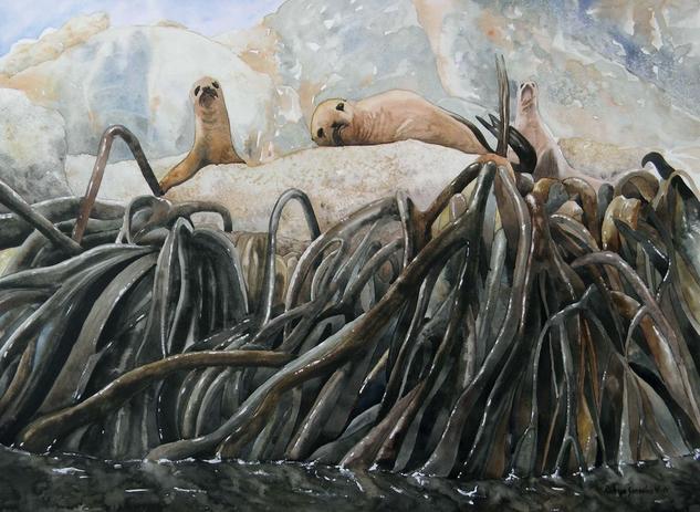Lobos de mar Papel Acuarela Animales