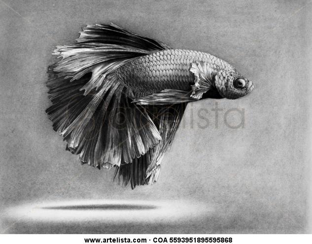 Pez | Fish Charcoal