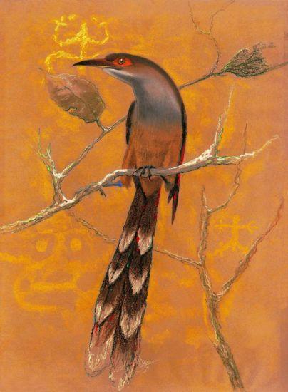 Pájaro bobo mayor Otros