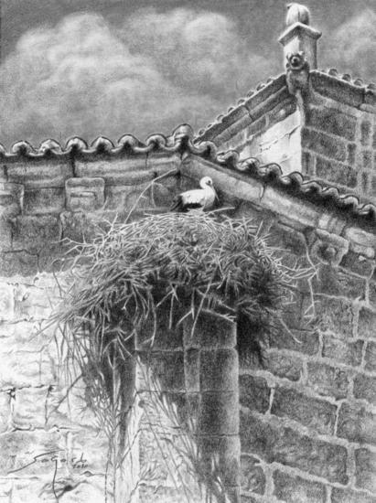 Cigüeña blanca en nido Animales Grafito Tabla