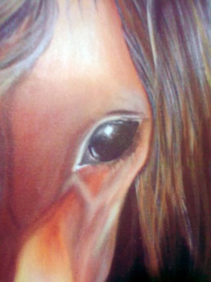 Mirada de Caballo Acrylic Canvas Animals