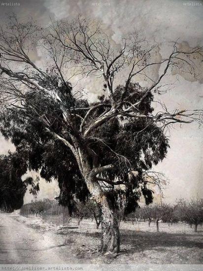 Testigo del tiempo Naturaleza Blanco y Negro (Digital)