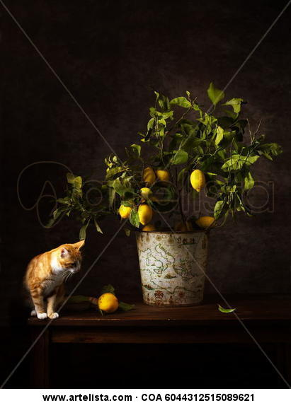 Bodegón del gato y el limón Técnicas alternativas Bodegones