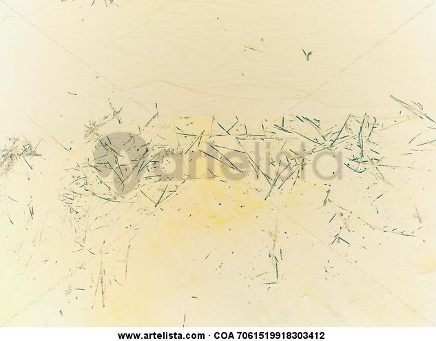 Escritura sagrada Color (Digital) Naturaleza
