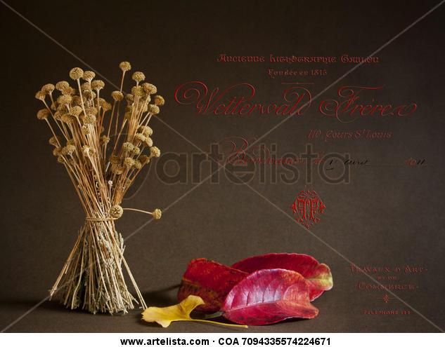 la santolina, el otoño y los textos franceses