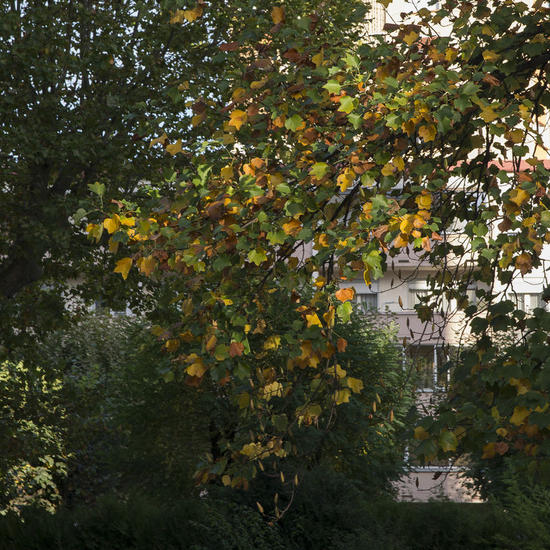 Abstracto otoñal - 14-10.007 Color (Digital) Conceptual/Abstracto
