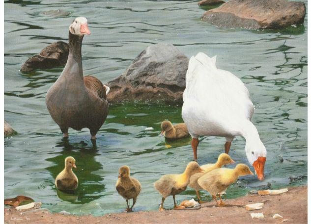 La Familia Acrílico Lienzo Animales