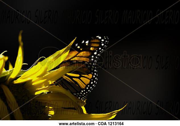sun and wings Naturaleza Color (Digital)