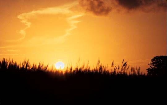 Sugar cane sunset Viajes Color (Química)