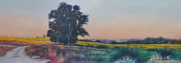 paisaje con campos de girasoles al atardecer