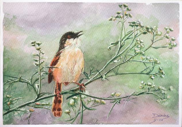 Pájaros Cartulina Acuarela Animales