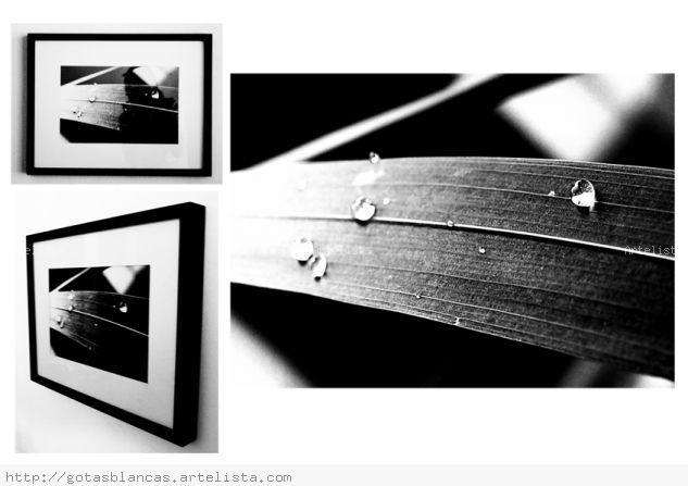 GOTAS - B Y N Arquitectura e interiorismo Blanco y Negro (Digital)