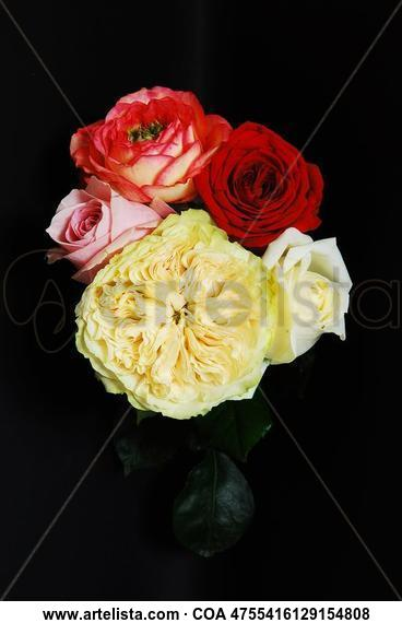 Cinco Rosas para Cinco Sentidos. Bodegones Color (Digital)