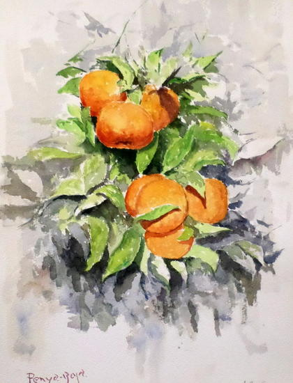 Naranjas amargas Still Life Paintings Watercolour Paper