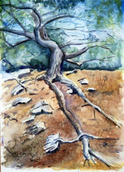 El árbol de Cadaqués Papel Acuarela Paisaje
