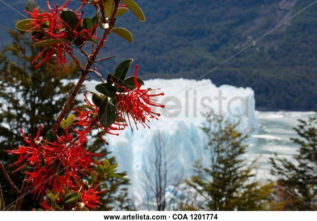 Rojos y blancos Nature Color (Digital)