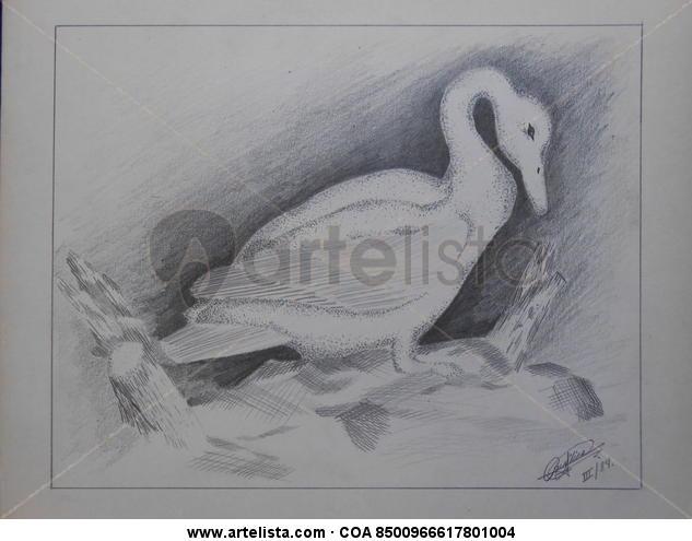 Precioso ( precious) Cartulina Lápiz (Negro) Animales