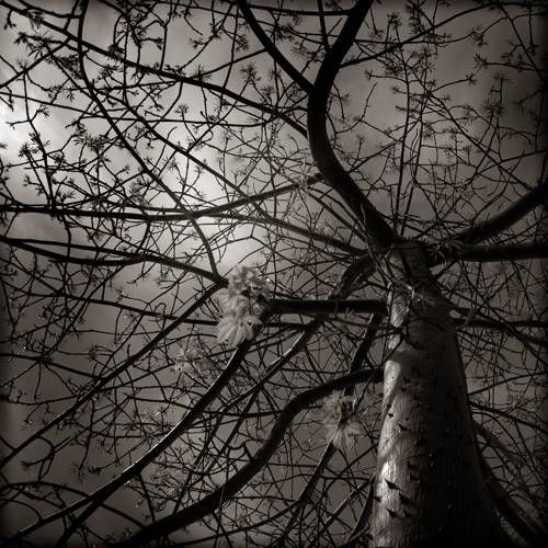 B&W#3 Nature Black and White (Digital)