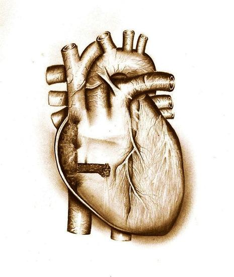 Q#válvula cardíaca Lápiz