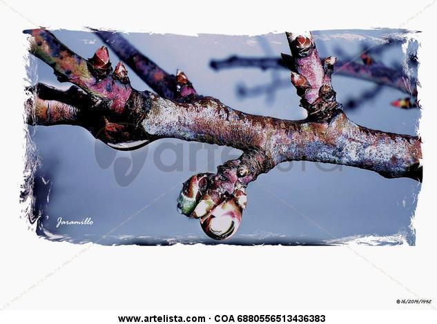cerezo en primavera Color (Digital) Naturaleza