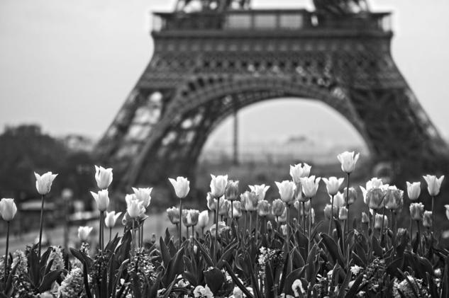 JARDINS DU TROCADERO Black and White (Digital) Travel