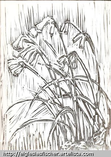 Amancay, Añañuca de fuego, (Phycella ignea) Linograbado
