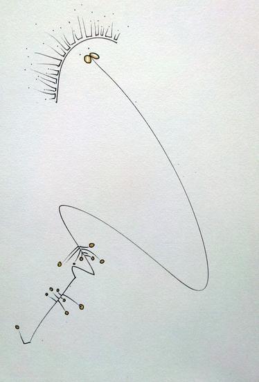 Autoretrato Rotulador
