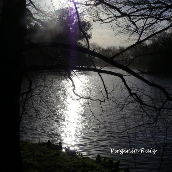 reflejos Black and White (Digital) Nature