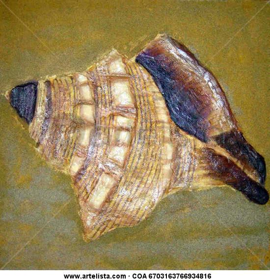 caracola en relieve modelada sobre tablero