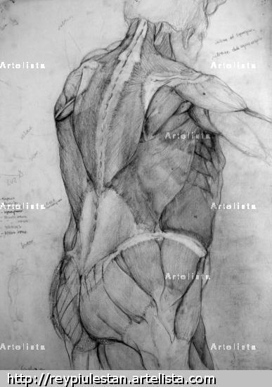 Cuaderno de Anatomia  1 Pencil