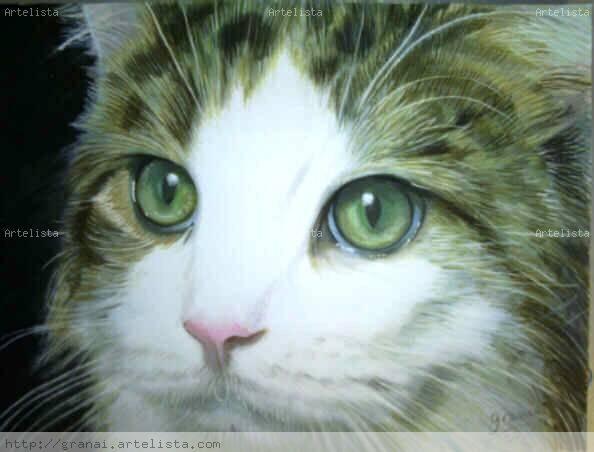 ojos verdes - gato