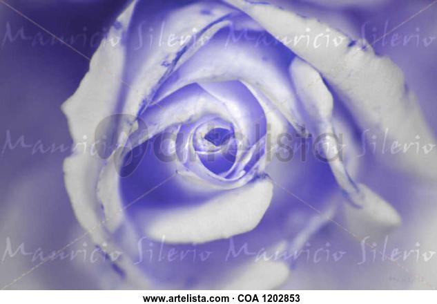 purple love Naturaleza Color (Digital)