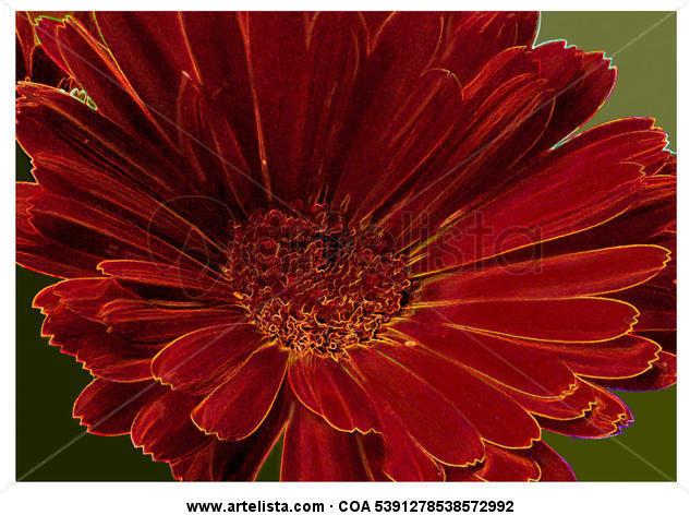 calendula officinalis / Caléndula Color (Química) Naturaleza