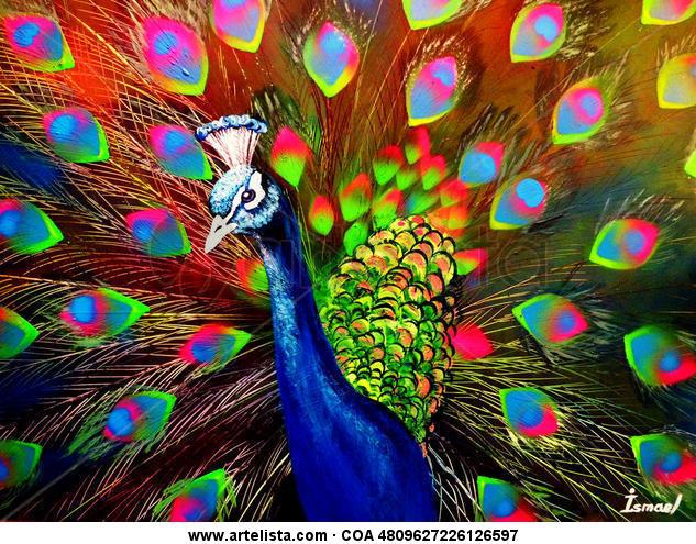 Peacock Cartulina Grafito Animales