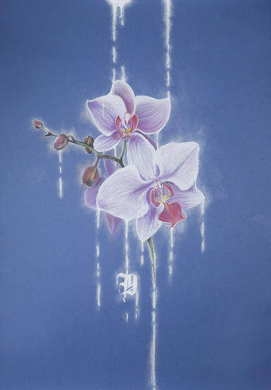 orchid Otros