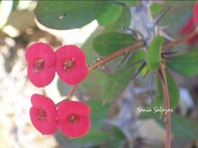 Gotas de color Naturaleza Color (Digital)