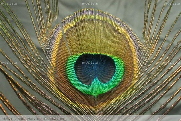Pluma real Color (Digital) Naturaleza