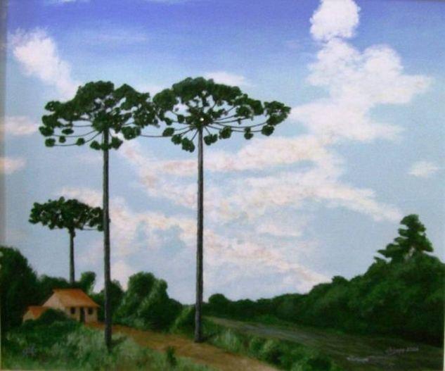 j06024 paisagem com araucárias