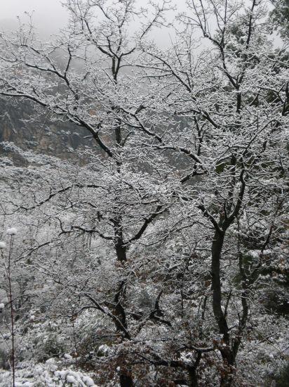 Pesan mis ramas Naturaleza Color (Digital)