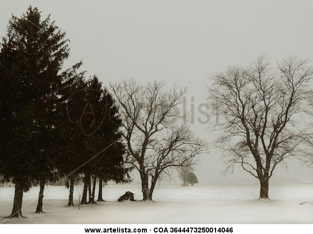 Snowy landscape -Paisaje nevado Color (Química) Naturaleza