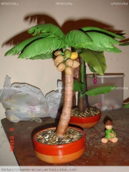 palmas de coco. Bonsai Palma de Coco