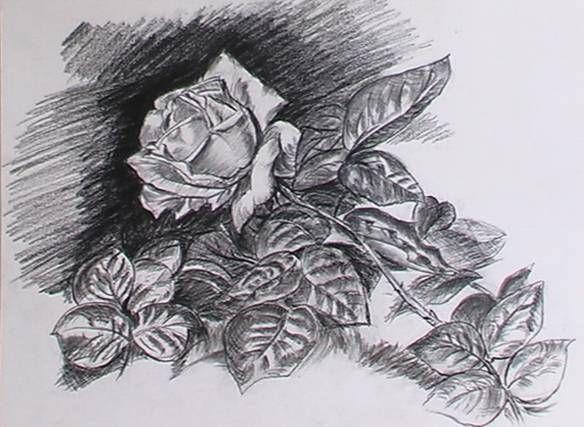 Imajes de una rosa dibujada con lapiz - Imagui