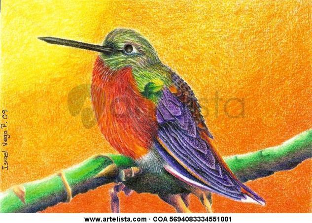 Colibrí. Lápiz (a color) Animales Piel