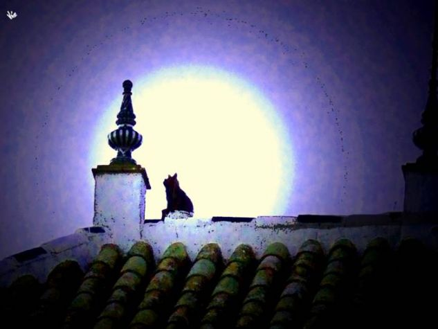 gato maullando a la luna Técnicas alternativas Naturaleza